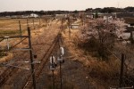 "from the series ""Unknown Spring"" – An overview of Odaka, Fukushima."