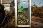 "from the series ""Unknown Spring"" – A telephone booth that became a hothouse for weeds and vines just outsied the Momouchi Station, Fukushima."