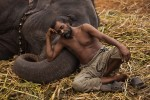 Aathinayaki, the elephant of Aathinaathar temple, takes a nap with her mahout Karim Sait during the 8th annual rejuvenation camp for temple elephants at Thekkampatti, near Mettupalayam, on the banks of the river Bhavani in Tamil Nadu, India, in January 2016.
